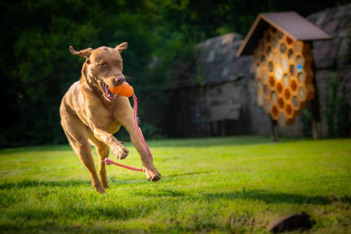 Tierfotografie Hundefotografie